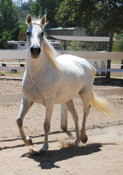 Foolie-Region-11-PATH-horse-of-the-year-@-REINS