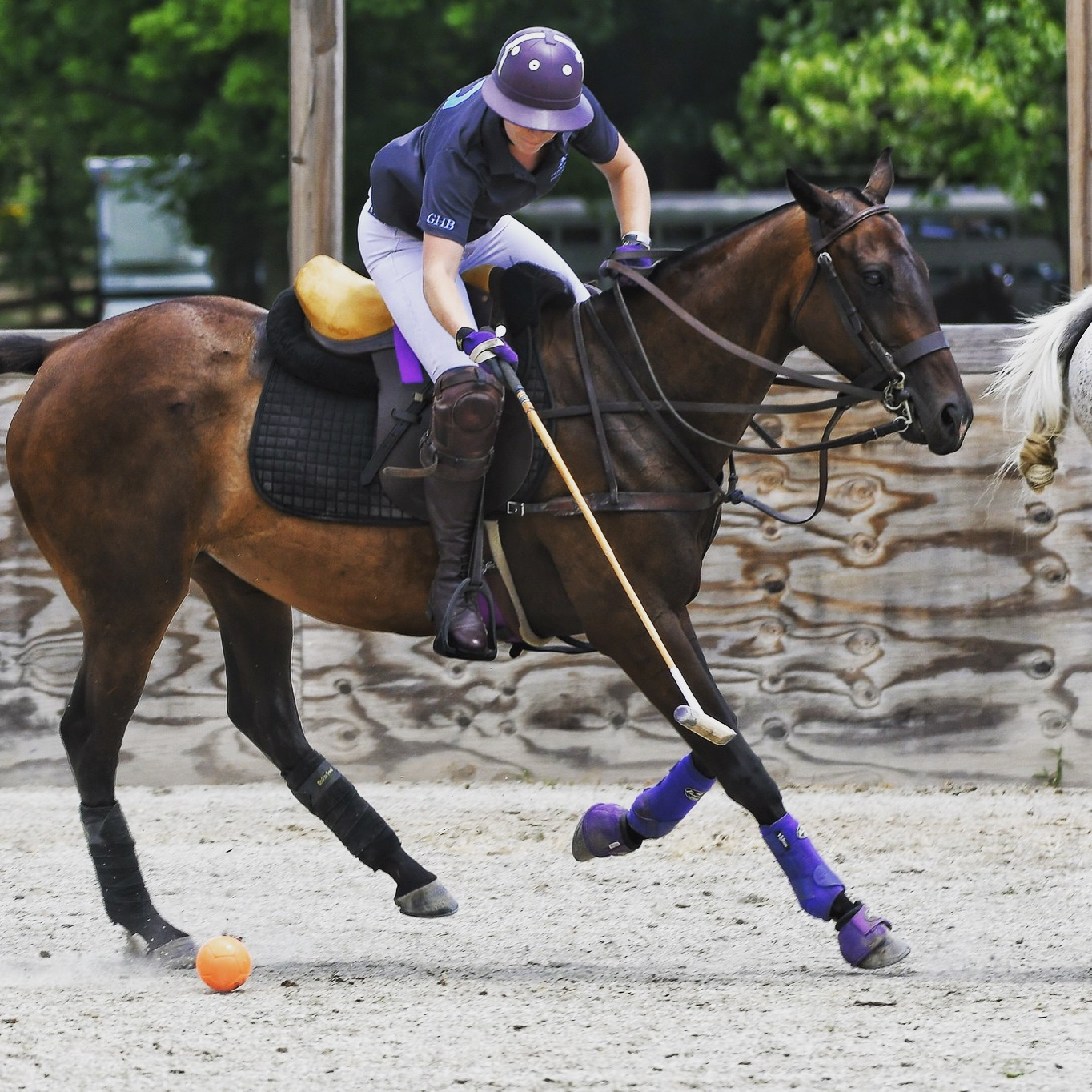 Chickie - ReplayPolo | A Therapeutic Riding Organization