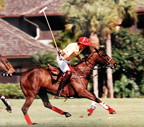donate-polo-horse-image